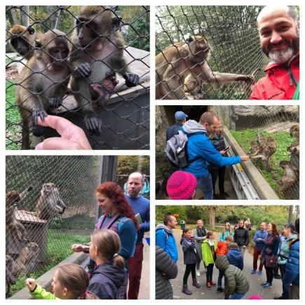 Neugierige und hungrige Javaner-Affen